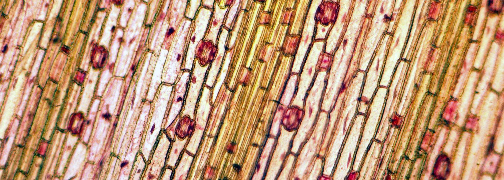 Mikroskopie als Hobby